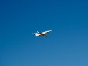 上空をホンダジェット・エリートが飛行。エンジン音がほとんど聞こえなかったので、最初滑空してるだけかと思った。凄い。